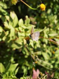 霜月の蝶たち - park diary