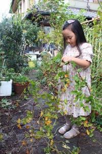 ジャングル(家の庭)の収穫 - AppleRose