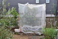 庭仕事と鉢物 - refresh-3