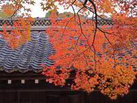 紅葉 6京都府 - ty4834 四季の写真Ⅱ