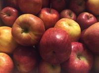 りんごの焼き菓子 アップフェルストウルーデル - ダイアリー