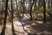 秋の匂い) - 故郷の宝物