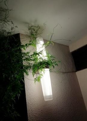 灯り - ないものを あるもので