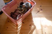 買い物カゴの陰とミッちゃん - 猫と夕焼け