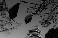 天守閣と秋模様 - フォトな日々
