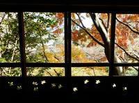 お香が漂う和室で紅葉を堪能~秋の和室公開~ - 大佛次郎記念館NEWS