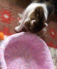 素敵な猫ベッド - まゆみのお絵描き絵手紙