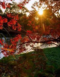 ✔ 紅葉始まる=熊本市・加勢川上流 - チャレンジ! 日々の散歩道