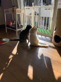 ひだまりでくつろぐ2人 - ぶつぶつ独り言2(うちの猫ら2018)