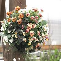 花のある暮らし - さにべるスタッフblog     -Sunny Day's Garden-