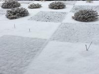 冬の庭 - 何もしない贅沢