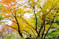 秋の日 - 長い木の橋