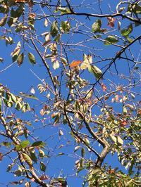秋の風景 - わたしの好きな物