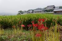 明日香村、雨情 - katsuのヘタッピ風景