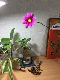 大手塾H11月公開模試 ~春撒いた種、実る秋~ - 国語で未来を拓こう
