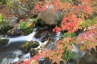 秋彩 - 感じるまま、気ままなblog