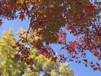 松島観光(1)美しすぎる紅葉♪ - よく飲むオバチャン☆本日のメニュー