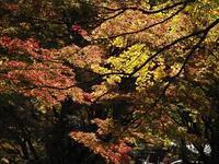 豪渓 紅葉 - 大山山麓、山、滝、鉄道風景