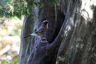 水場に姿を見せた鳥たち - 私の鳥撮り散歩