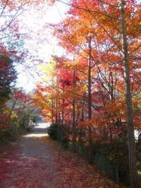 西谷の秋秋 - yoshiのGR散歩