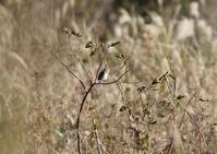 アリスイ - 写真で綴る野鳥ごよみ