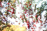 茅ヶ崎洋舞の会 - 写真の記憶