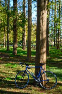 2019 自転車日和・秋の日サイクリング(水元公園〜柴又) - ろーりんぐ ☆ らいふ