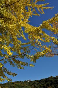 秋晴れ風景 - かたくち鰯の写真日記2