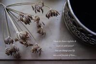 朽ちていく植物の美。 - mama's cafe & mama's table