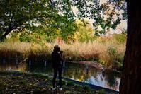 11月の野鳥@善福寺(カルガモ、アオサギ、オナガ、キジバト、カワセミ、キンクロハジロ、オナガガモ) - 世話要らずの庭