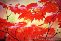 秋の彩り - As it is