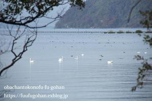 琵琶湖産鱒のムニエル弁当&琵琶湖は、すっかり冬支度&朝食色々 - おばちゃんとこのフーフー(夫婦)ごはん