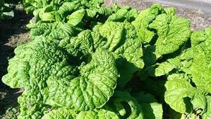 野菜セット販売再開、並びに春アスパラ - 仁左衛門のアスパラ日記
