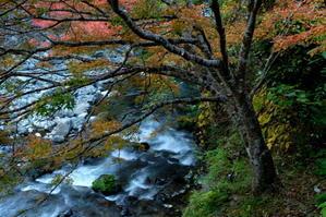 静かな秋色・・・京北で探す - わらび徒然