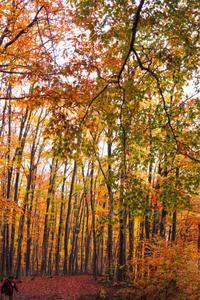 美人林の紅葉 - 松之山の四季2