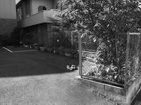 東大阪 - デーライトなスナップ