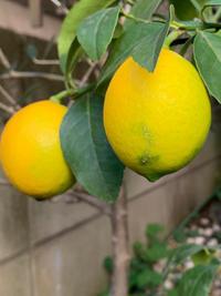 レモン - BEAUTIFUL THING