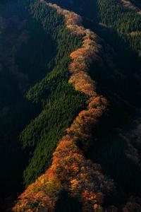 ナメゴ谷の秋(行者還林道) - 花景色-K.W.C. PhotoBlog