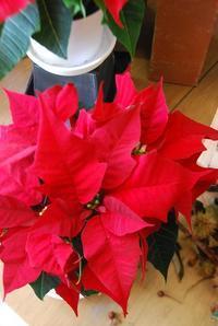 11月22日はいい夫婦の日。 - 花と暮らす店 木花 Mocca