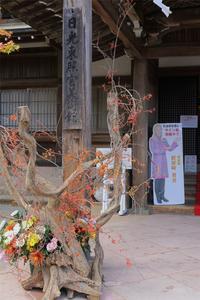 假屋崎省吾の世界展 in 日光東照宮Vol.1 - TOCHIGI FOUR SEASONS