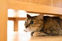 丸い瞳のリッちゃん - 猫と夕焼け