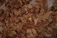 落葉の海 - フォトな日々