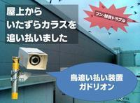 千葉県M市の屋上に集まるカラスの大群・・・音を聞かせた結果(動画あり)【鳥獣被害対策】 - 鳥獣対策「人と動物の棲み分けを目指して」 byサウンズ情報部【鳥獣対策ブログ】