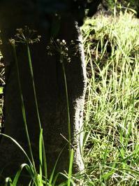 期末試験終わる - hibariの巣