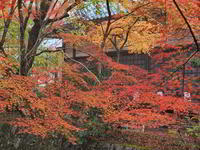 紅葉 10京都府 - ty4834 四季の写真Ⅱ