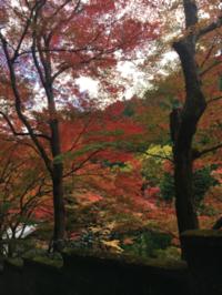 紙屋川ぞいをそぞろ歩く - 京都西陣 小さな暮らしから、田舎暮らしへぼちぼち・・・