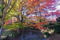紅葉・黄葉(村松公園) - くろちゃんの写真