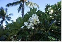はじめてのHawaii:5日目①Dean&Delucaのハワイ限定トート♪ - **いろいろ日記**