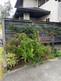 植栽リニューアルと土壌改良 - 花の庭づくり庭ぐらしガーデニングキララ