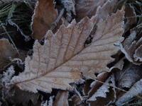 凍える朝 - 八ヶ岳 革 ときどき くるみ